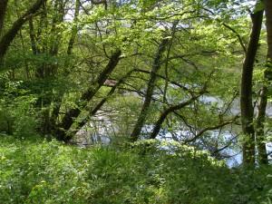 Hansted-skov